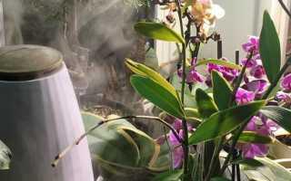 Полив орхидей в домашних условиях