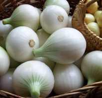 Белый лук для чего использовать можно